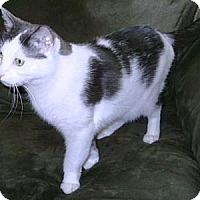 Adopt A Pet :: Baby Boy - Gilbert, AZ