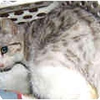 Adopt A Pet :: Casey - Dallas, TX