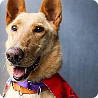 Adopt A Pet :: Bea - Santa Barbara, CA
