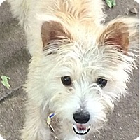 Adopt A Pet :: Sunshine - Austin, TX