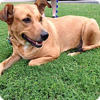 Adopt A Pet :: Henley - Marietta, GA
