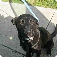 Adopt A Pet :: Duey - San Antonio, TX