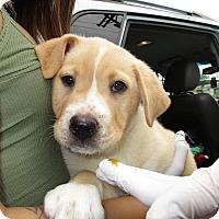 Adopt A Pet :: Micah - Charlestown, RI