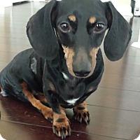 Adopt A Pet :: Trudy - Decatur, GA