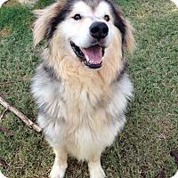 Adopt A Pet :: Tango  Adopted - Tulsa, OK
