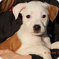 Adopt A Pet :: Luna (5 lb) Unique Pup! - Sussex, NJ