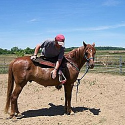 Photo 4 - Quarterhorse/Tennessee Walking Horse Mix for adoption in Lyles, Tennessee - Reddy