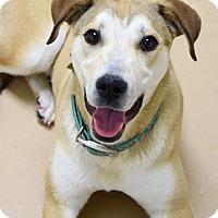 Adopt A Pet :: Nina - Dublin, CA