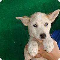 Adopt A Pet :: Freeway - Oviedo, FL