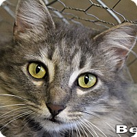 Adopt A Pet :: Bella - Texarkana, AR