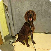Adopt A Pet :: *LIAM - Upper Marlboro, MD