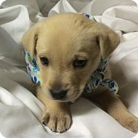 Adopt A Pet :: Sonny - Buffalo, NY