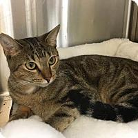Adopt A Pet :: Joanie H - Melbourne, FL