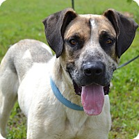 Adopt A Pet :: Mack - Larned, KS