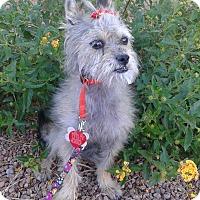 Adopt A Pet :: Lacie - Las Vegas, NV