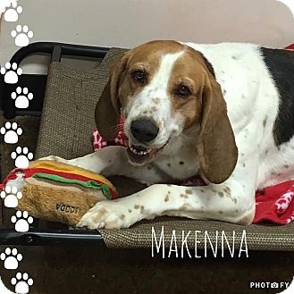 Hound (Unknown Type) Mix Dog for adoption in Albion, New York - Makenna