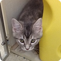 Adopt A Pet :: Martina - Warren, OH