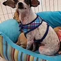 Adopt A Pet :: Pedro - Mesa, AZ