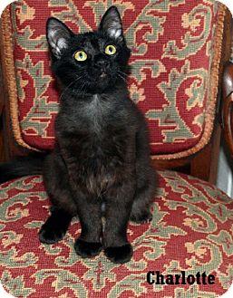 Domestic Shorthair Kitten for adoption in Fullerton, California - Charlotte