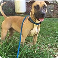 Adopt A Pet :: HOPE - Coeburn, VA