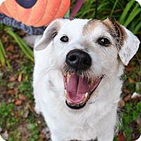 Adopt A Pet :: Patch - Michigan City, IN