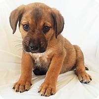 Adopt A Pet :: Dunkin - Mooresville, NC