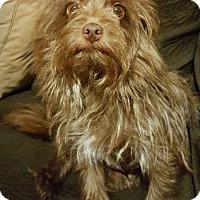 Adopt A Pet :: Axel - Monrovia, CA