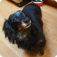 Adopt A Pet :: Belle - Taunton, MA