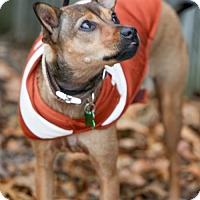 Adopt A Pet :: Carrie Cranberry - Plano, TX