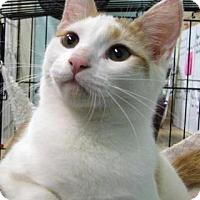 Adopt A Pet :: Pogo - Las Cruces, NM