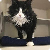 Adopt A Pet :: Opelia - Hudson, NY