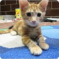 Adopt A Pet :: Sammy - Centerburg, OH