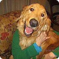Adopt A Pet :: COFFEE BEAN - Avon, OH