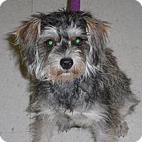 Adopt A Pet :: Stormie - Lockhart, TX