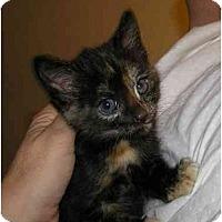 Adopt A Pet :: Beatrice - Bristol, RI