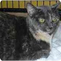 Adopt A Pet :: Bethany (& Sandi) - Arlington, VA