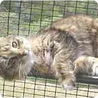 Adopt A Pet :: Jody - Lunenburg, MA