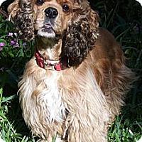 Adopt A Pet :: Dodger - Sugarland, TX