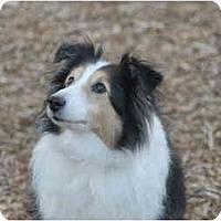 Adopt A Pet :: Murphy Brown - Ft. Myers, FL