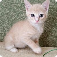 Adopt A Pet :: Augustus - Phoenix, AZ