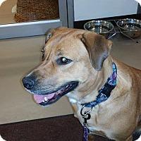 Adopt A Pet :: Chelsea - Pierrefonds, QC