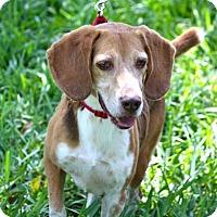 Adopt A Pet :: Rocky V - Miami, FL
