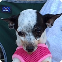 Adopt A Pet :: Minnie - San Marcos, CA