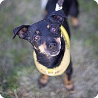 Adopt A Pet :: Dallas - West Hollywood, CA