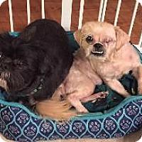 Adopt A Pet :: Gizmo & Peanut - LEXINGTON, KY