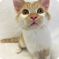 Adopt A Pet :: Rusty - Mission Viejo, CA