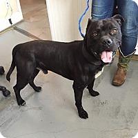 Adopt A Pet :: 4479 - Calhoun, GA