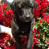 Adopt A Pet :: Rue Pup - Fennel - Adopted! - San Diego, CA