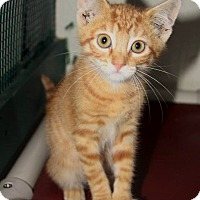 Adopt A Pet :: Huey - Grinnell, IA