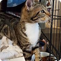 Adopt A Pet :: Jett - Fallbrook, CA